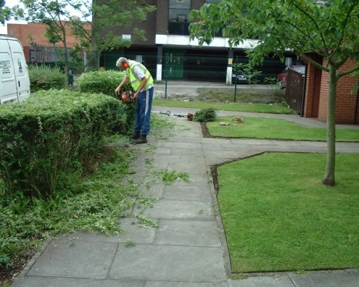 Shrub Care Image